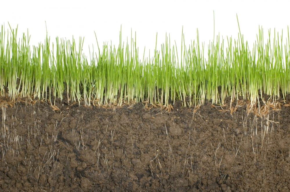 soil-boii.jpg