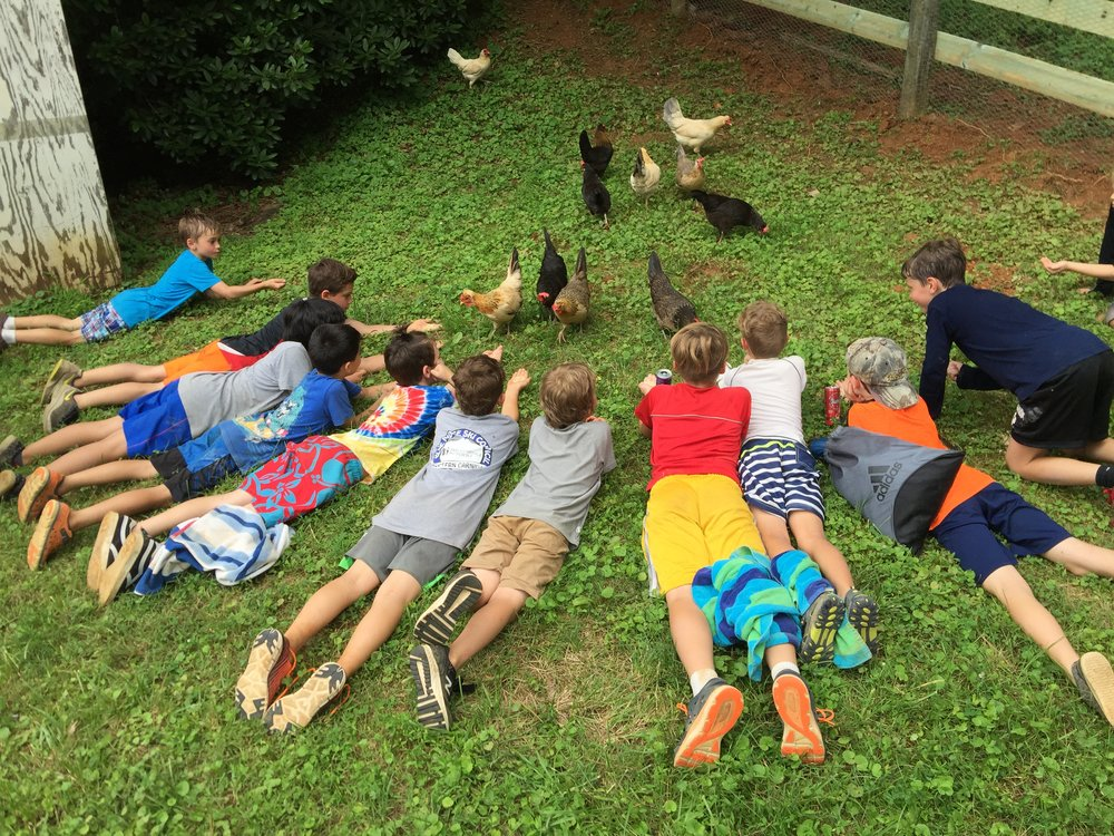 campers and chickens.JPG