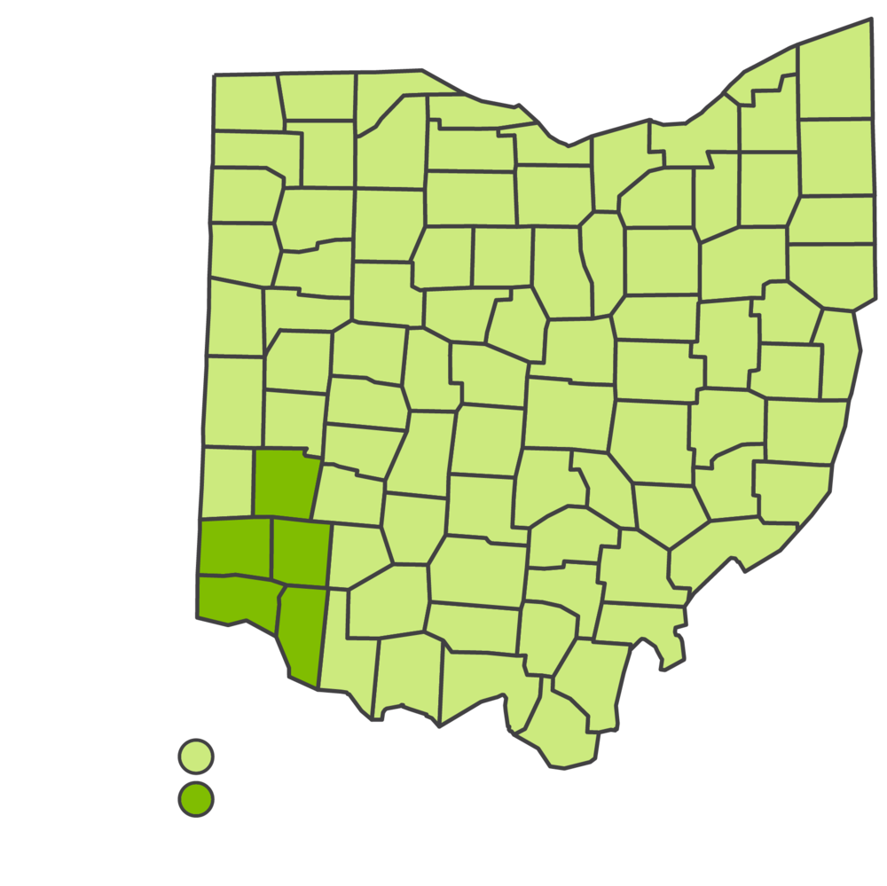 Taziki's Cafe Franchising | Ohio Markets