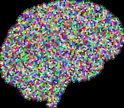 Brain; treat speech lanaguge imapirments at CAnto Speech Therapy Online