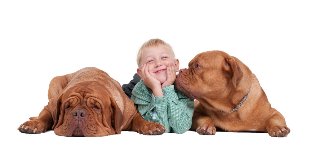 Boy_with_Dogs@2x.jpg