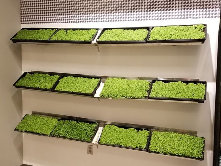 WE GROW HOPE | add an in-store herb wall