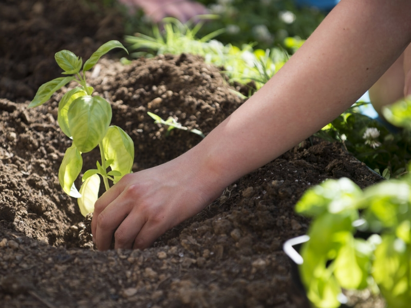 WE GROW HOPE | plant a HOPE garden