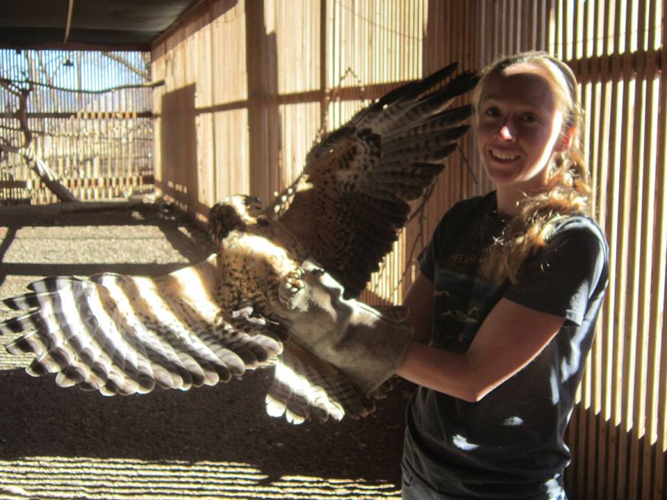 Erin Romero - Erin has been with the Foundation since 2010. She has her B.S. in Animal Science and is also a Certified Veterinary Technician. She is licensed as a provisional wildlife rehabilitator.