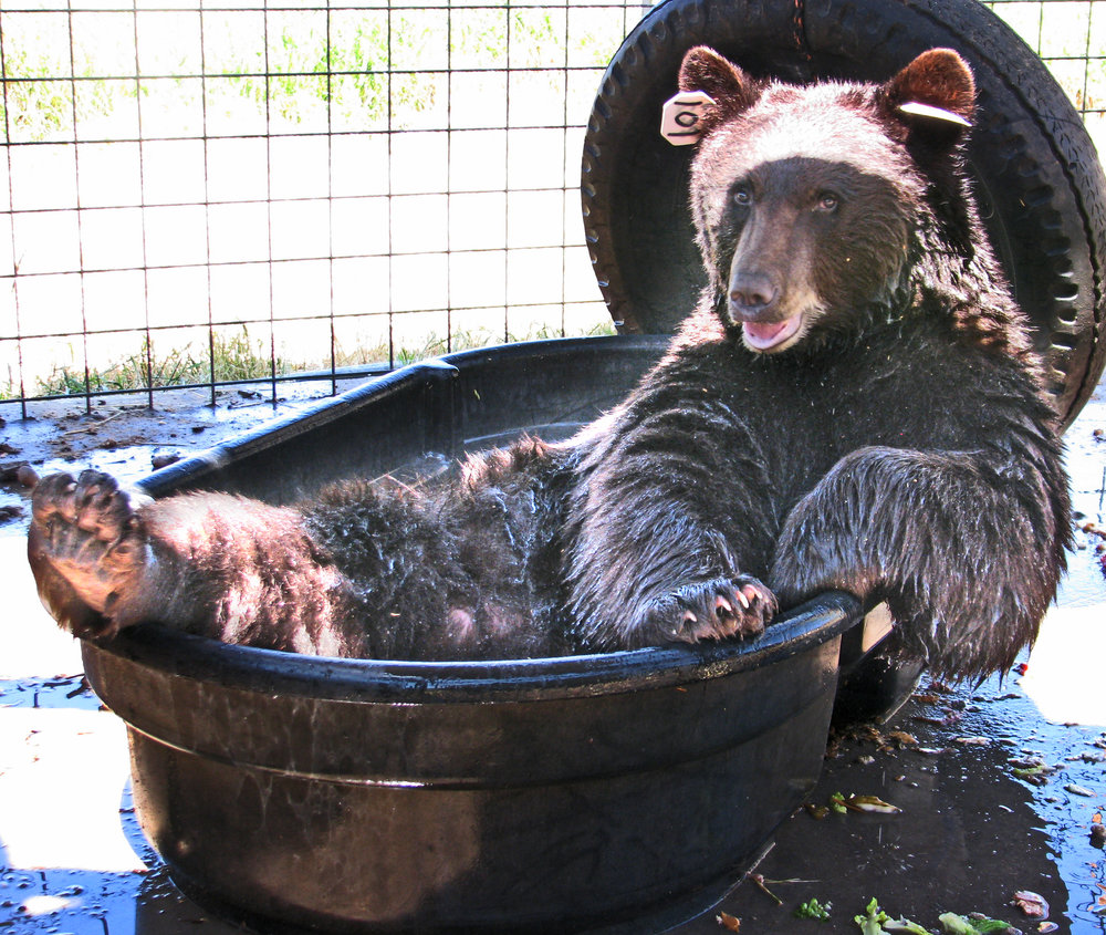 2. Bear in bathtub.jpg