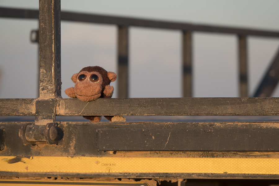 Mr. Monkey watching the sunset from Fish River Lodge.