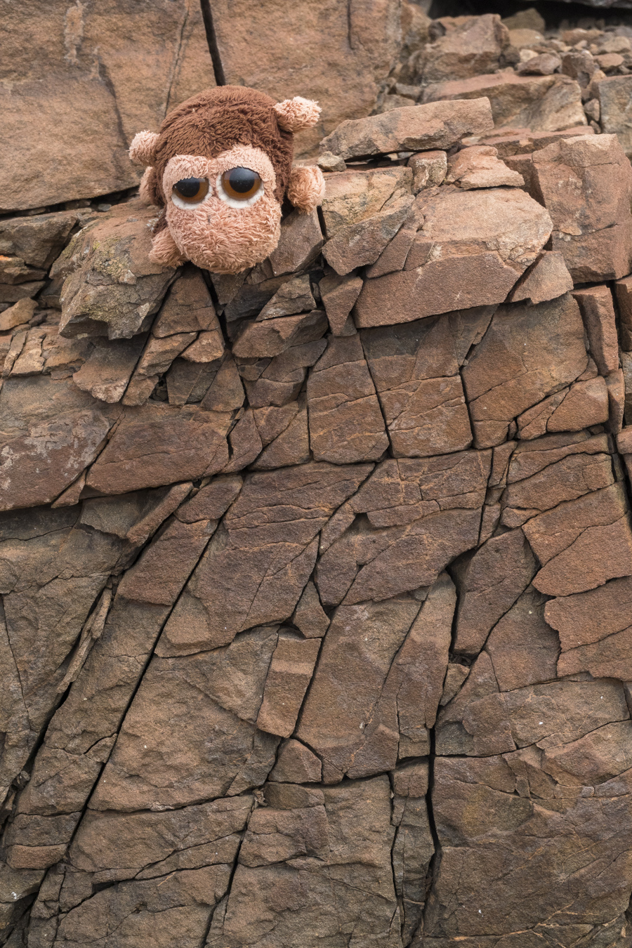 Mr. Monkey was very interested in these cracked rocks! It is so hot and dry in the desert!!