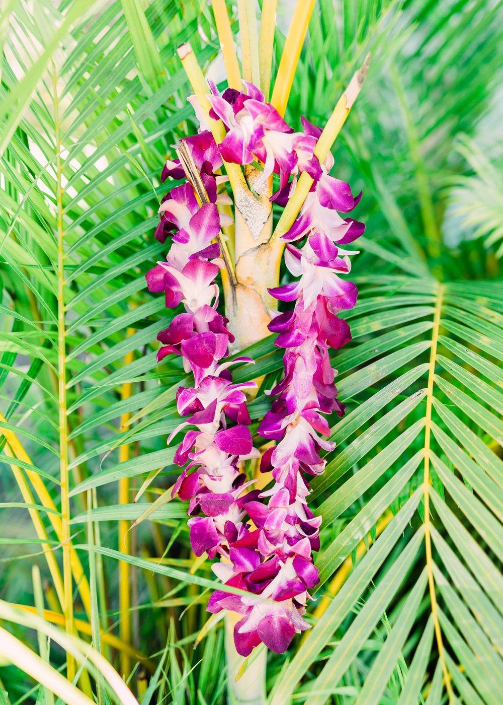 kauai-travel-cameron-zegers.jpg