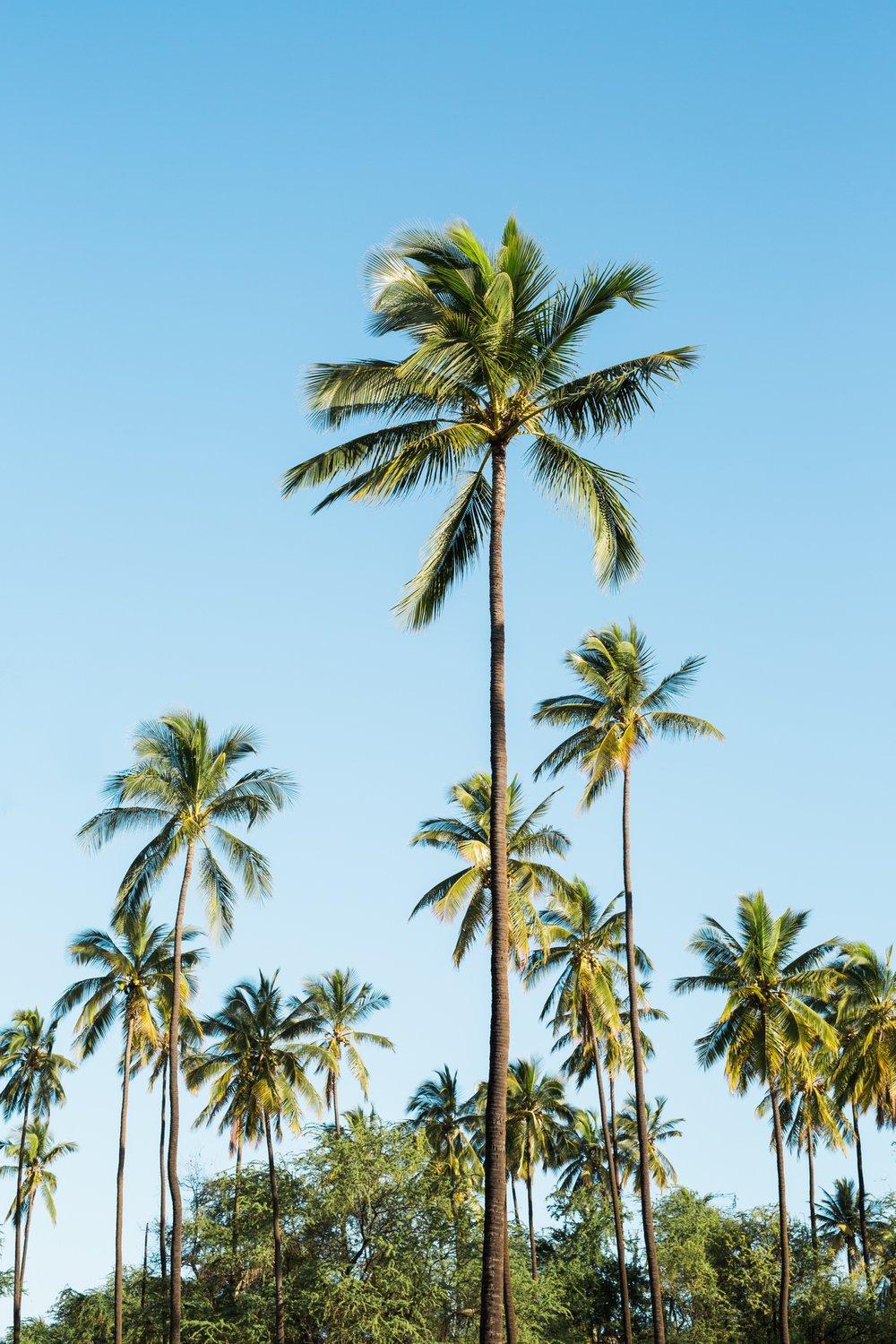 hawaii-travel-palm-trees-tropical-cameron-zegers.jpg