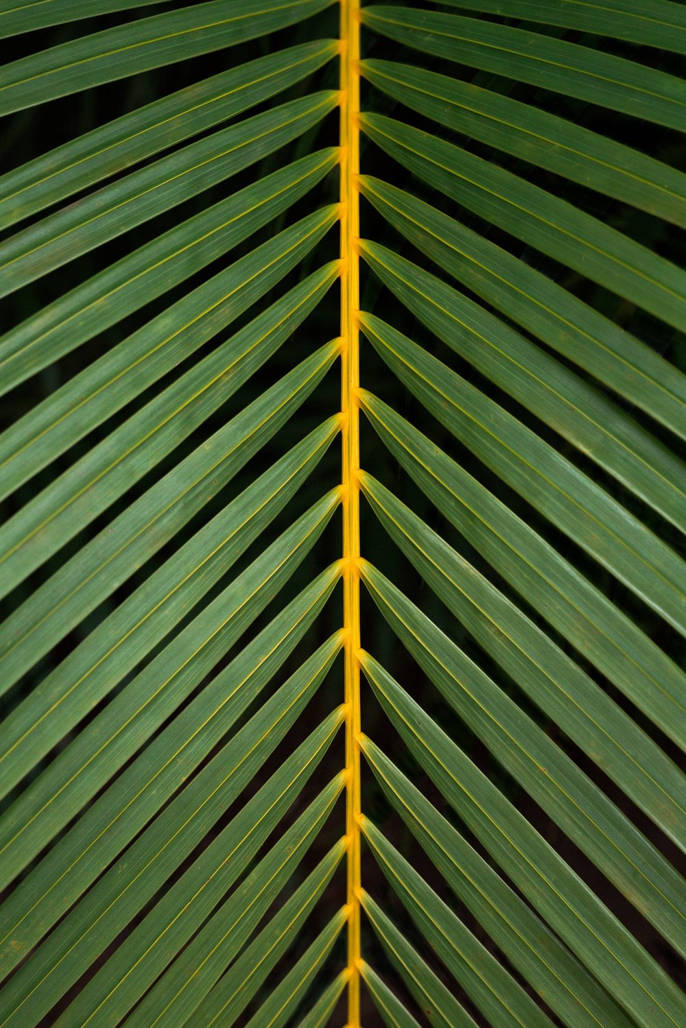 cameron-zegers-photography-hawaii-palm.jpg