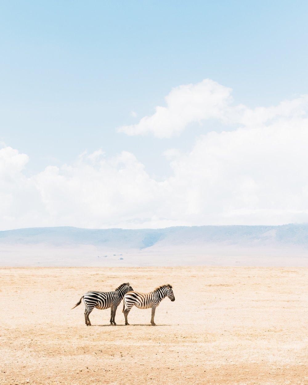 tanzania-zebras-travel-photographer-cameron-zegers.jpg