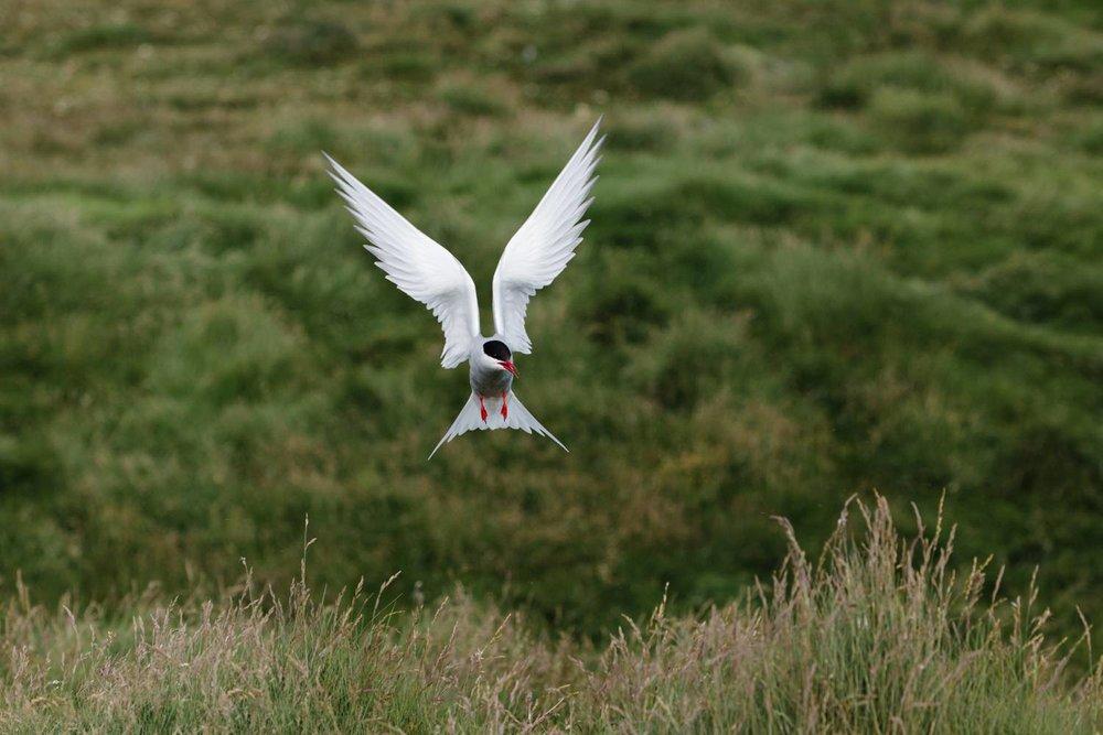 cameron-zegers-wildlife-photographer-iceland.jpg