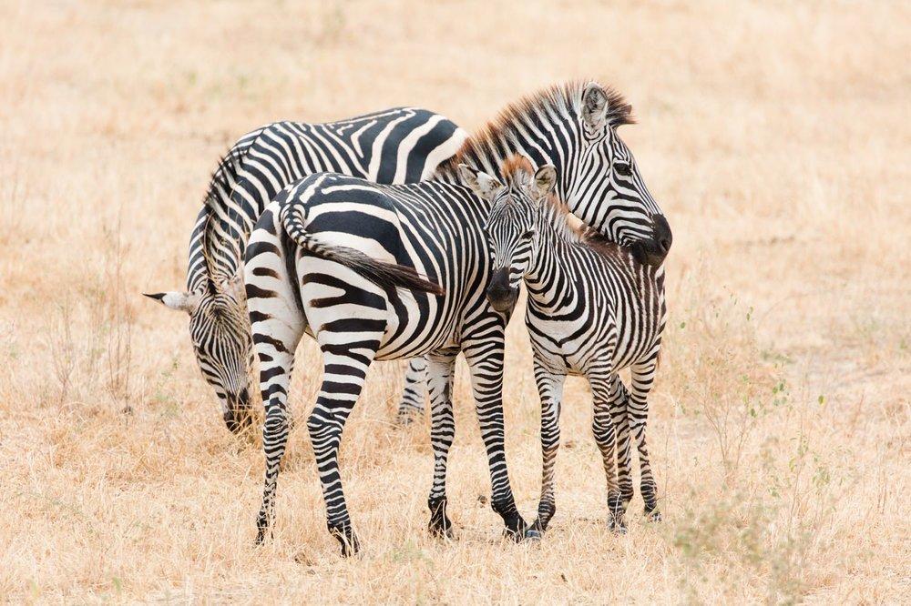cameron-zegers-travel-photographer-tanzania-wildlife.jpg