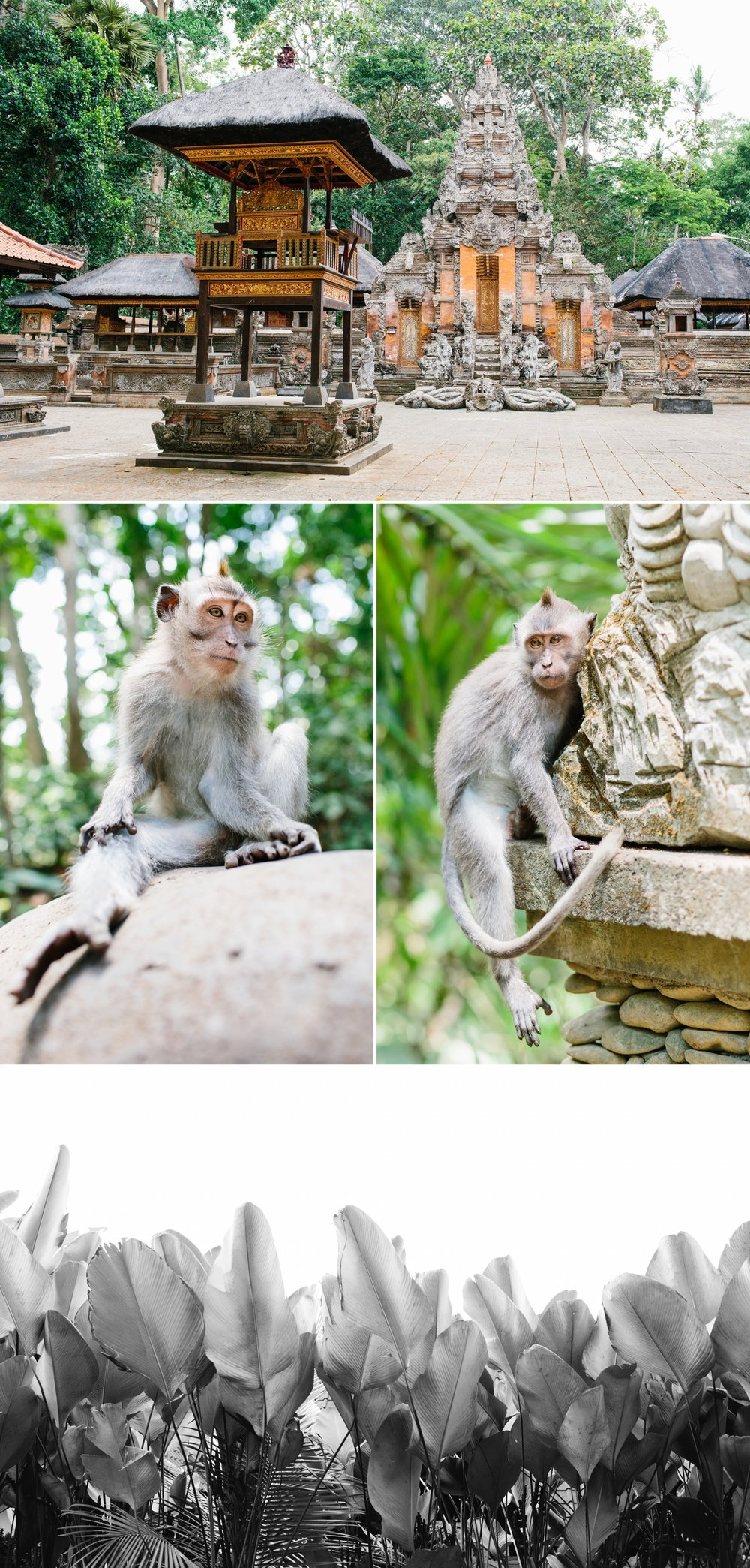 cameron-zegers-seattle-travel-photographer-bali-indonesia_0022.jpg