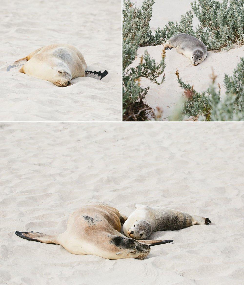 cameron-zegers-seattle-photographer-kangaroo-island-australia-travel_0012.jpg
