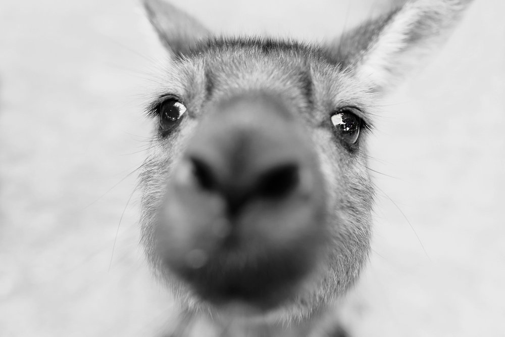 cameron-zegers-seattle-photographer-kangaroo-island-australia-travel_0020.jpg