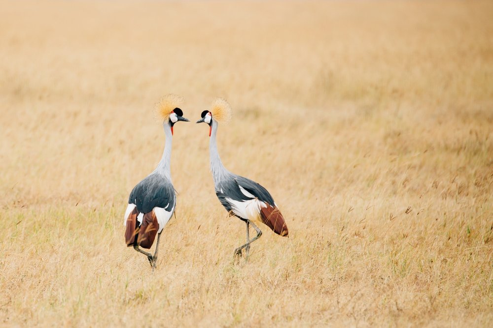 cameron-zegers-photographer-seattle-travel-national-geographic-student-expeditions-tanzania_0049.jpg
