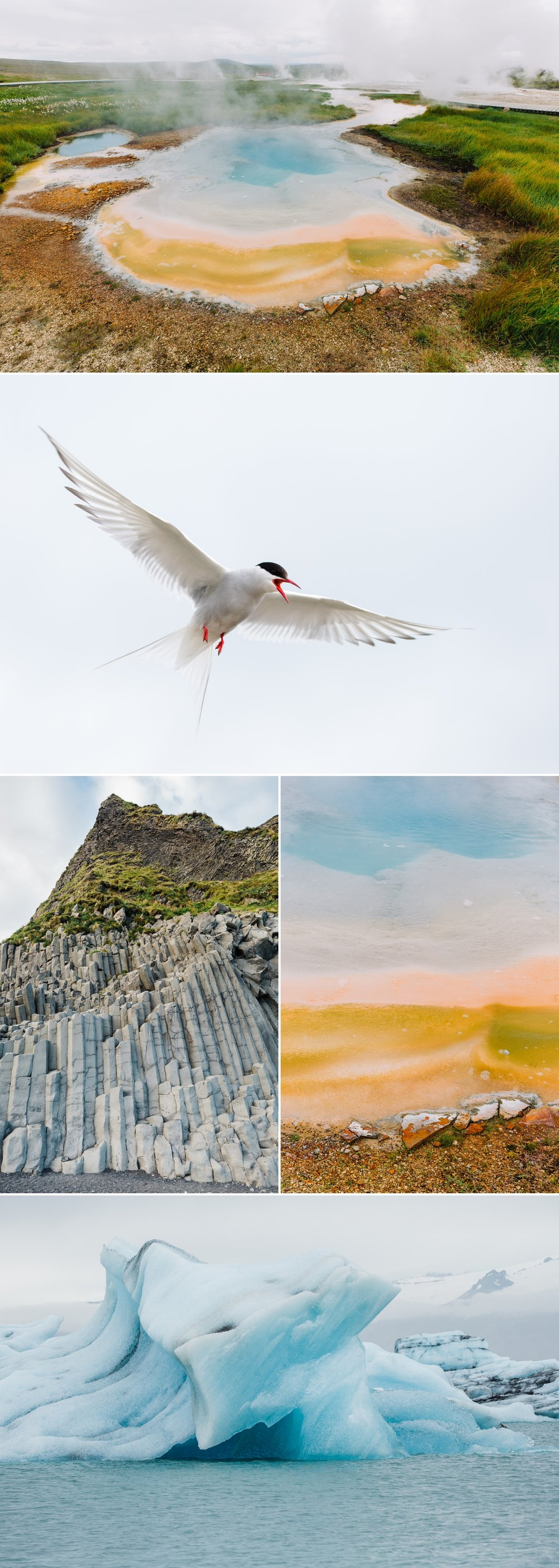 10-arctic-tern-geyser-iceburg.jpg