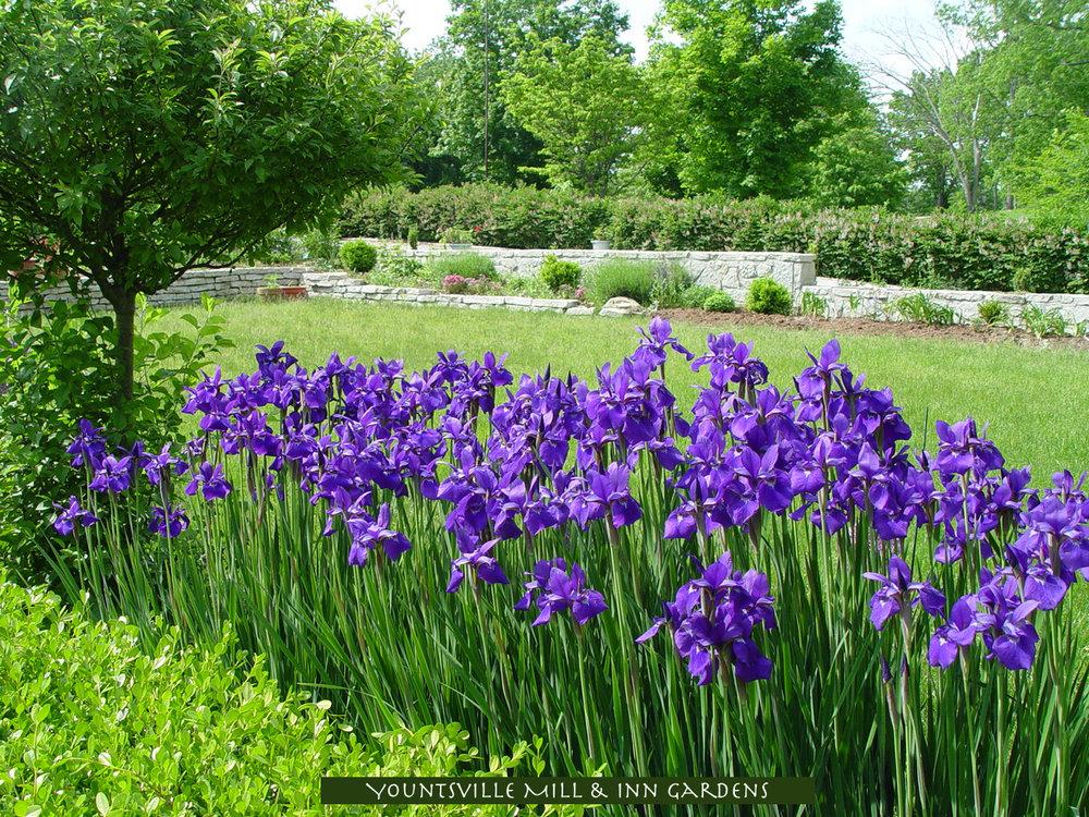 YM-garden-InnGarden05155.jpg