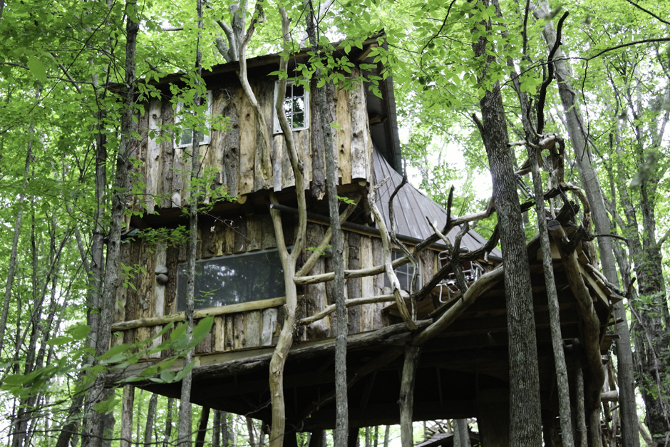 TREEHOUSE-FROM-BELOW.jpg