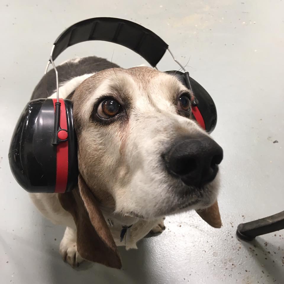 ears on.jpg