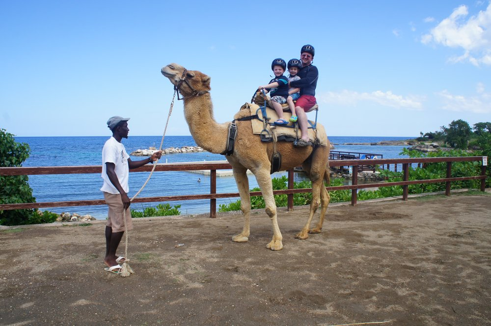 2014-03-06-Jamaica-Trip-Dolphin-Cove-255.jpg