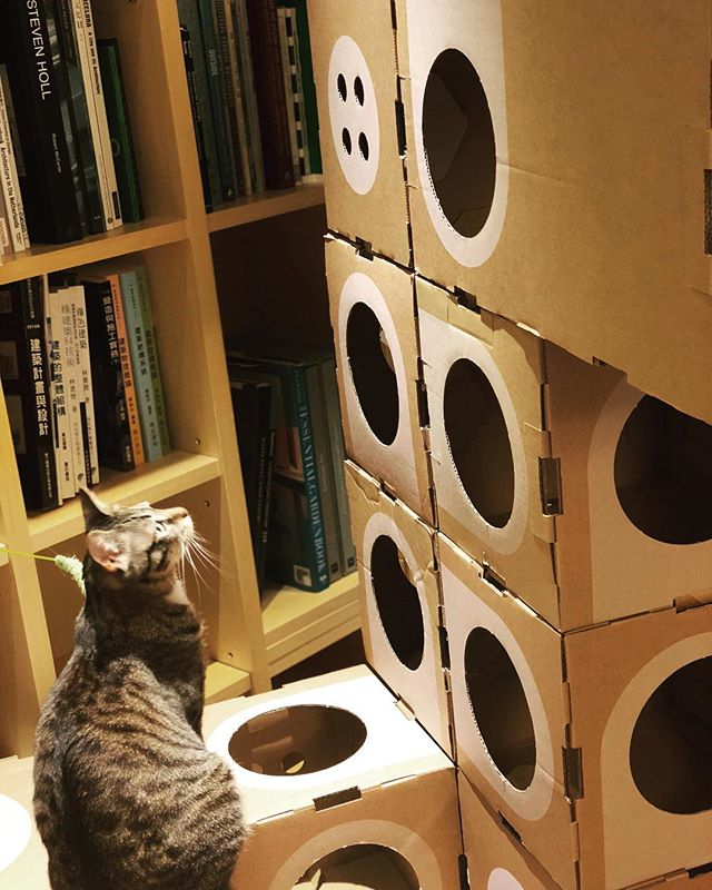 Which room I wanna go🤔...??? Lily has problem making decision😆👌 #acatthing #pusspuss #welovecats #catsofinstagram #cats #adoptdontshop #architechture #design
