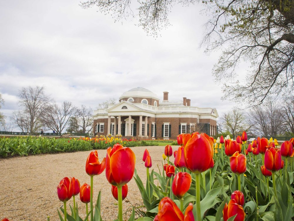 Monticello and tulips