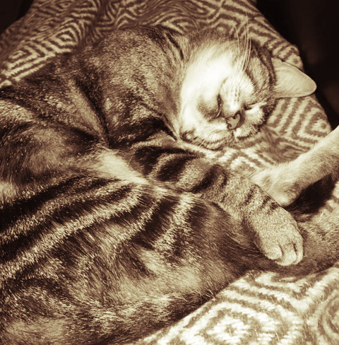 sleepy cat home.jpg