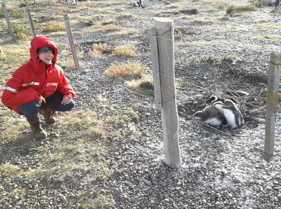 nidos pinguinitos patagonia.jpg