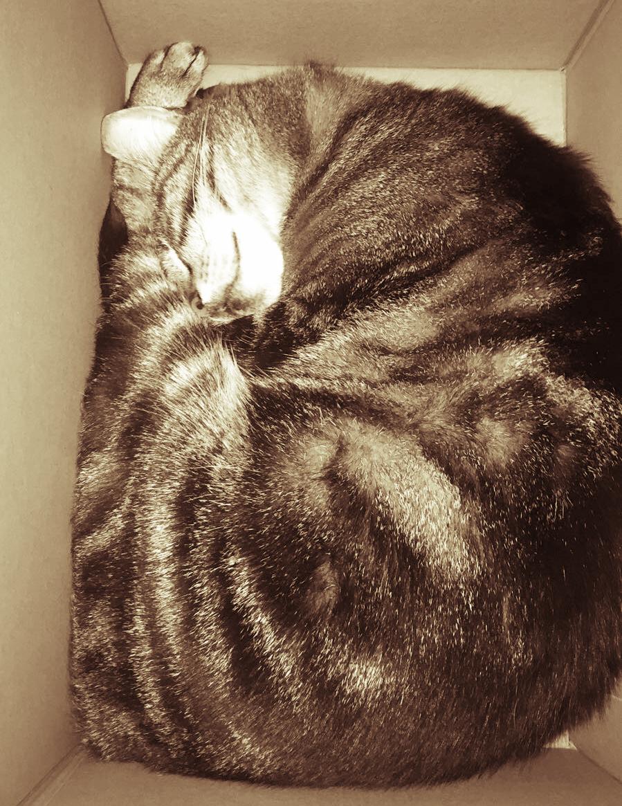 cat home sleep.jpg
