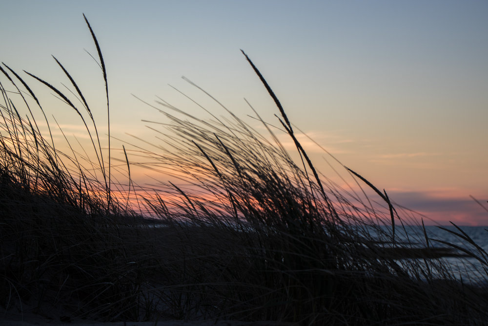 Beach scene showing the sunset past the beach grass with ocean in the background