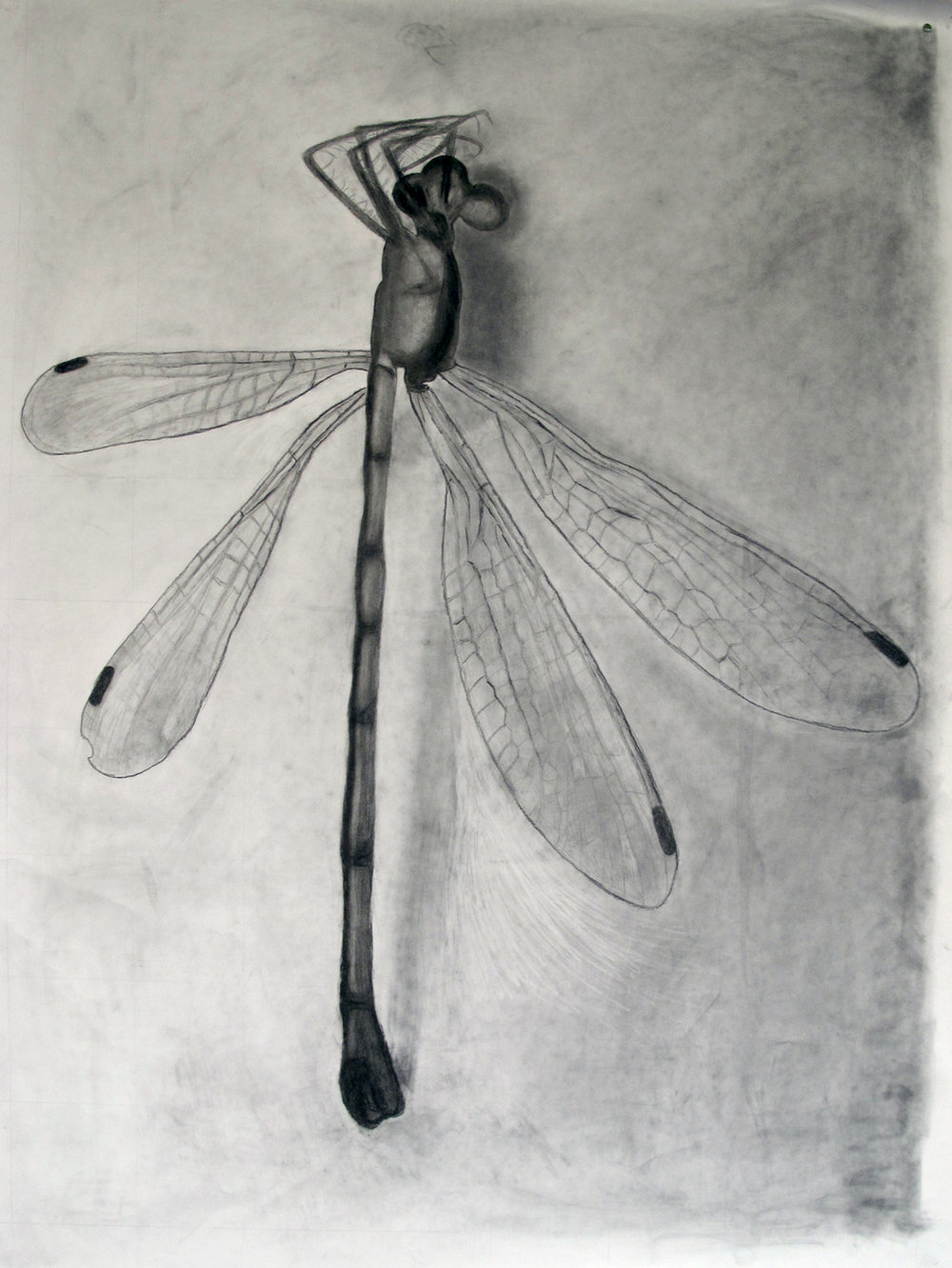 Jocelyn-dragonfly.jpg