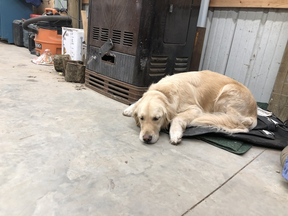 "Toby - Making sure that the ""Warm Morning"" is protected and burning hot. With his help - the shop was a nice 63 degrees today - much better than the 28 that we had outside."
