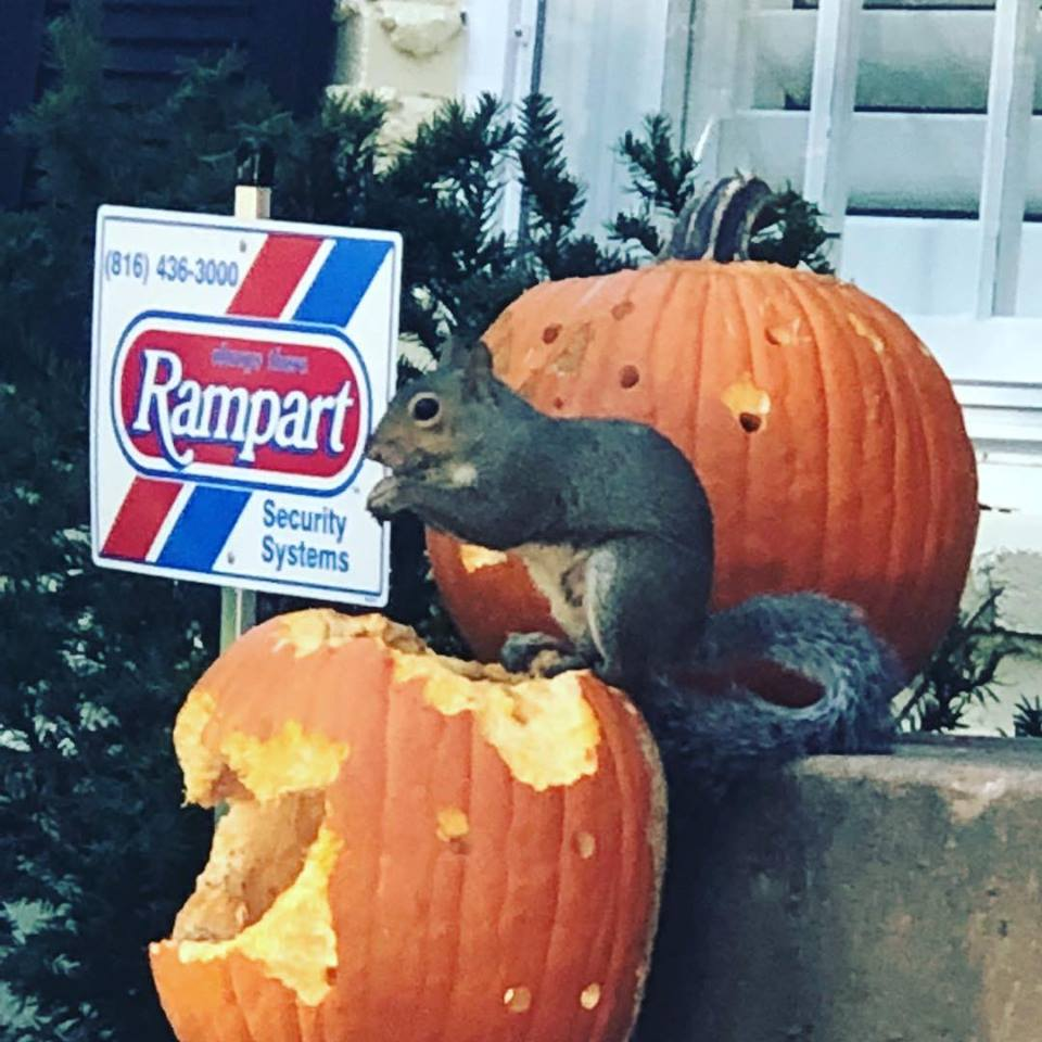 Rampart Pumpkins.jpg