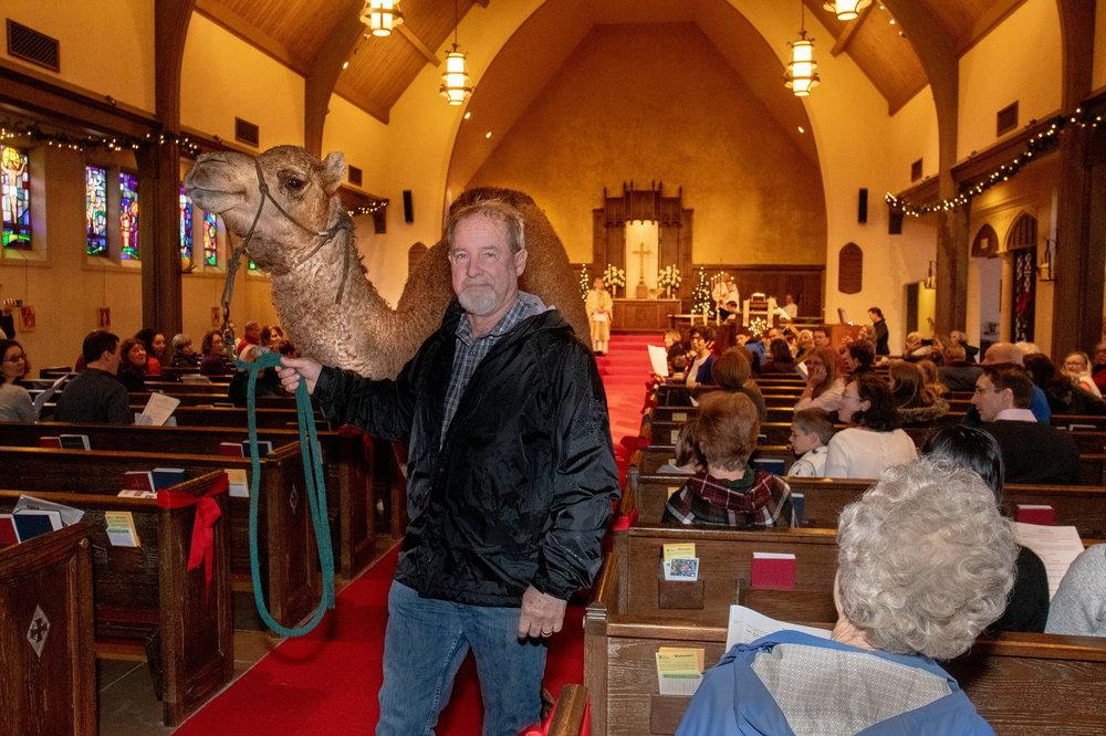 camel_2.jpg