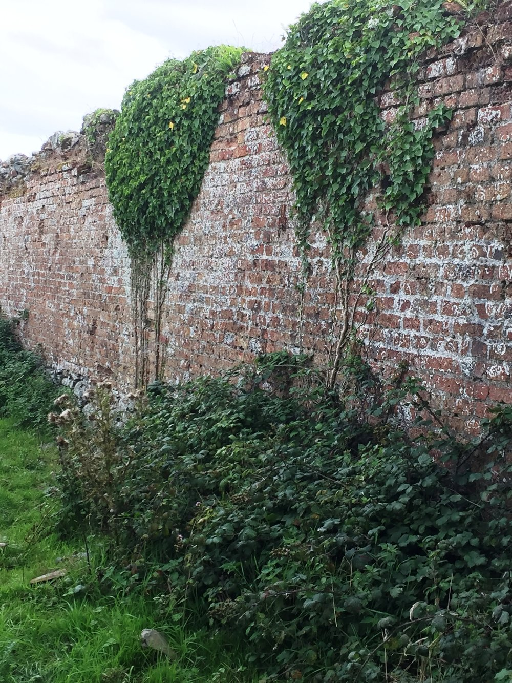 Ivy And Brambles Scramble Up The Walls But They Remain Solid