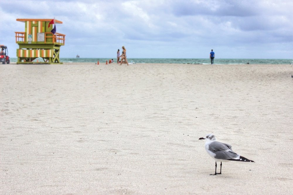 lifesthayle-miami-photodiary-south-beach-bird.jpg