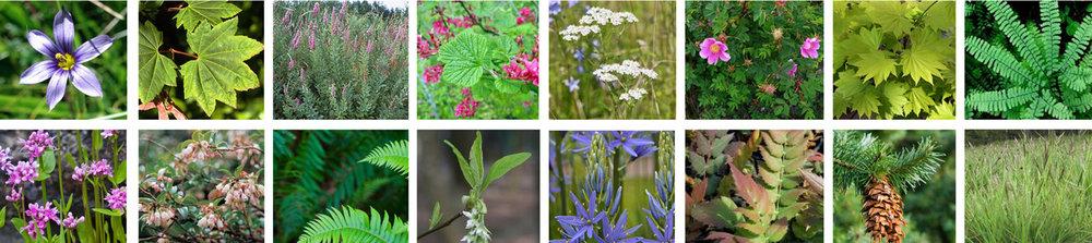 HIFH_plants_web.jpg
