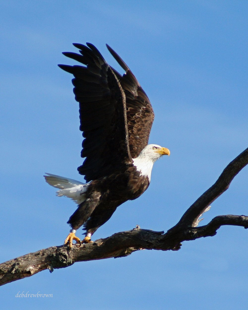 Bird Eagle.jpg