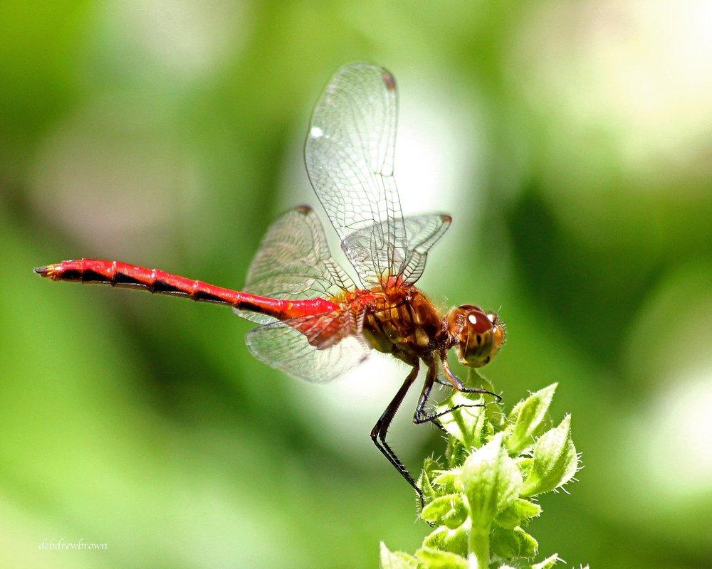 BUGS Dragonfly 20x16 name edited IMG_4862.jpg