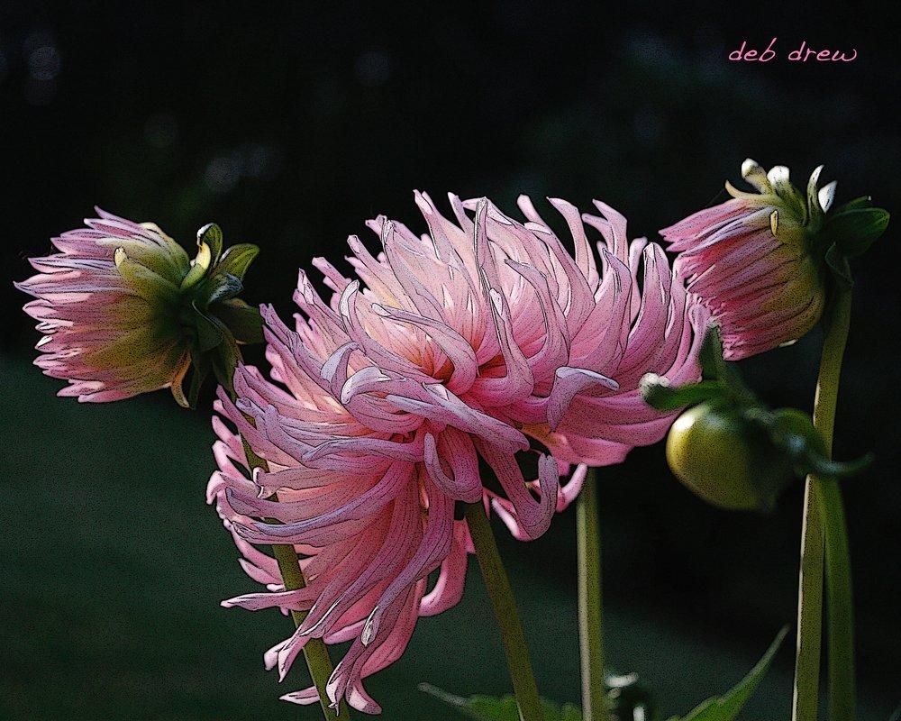 Flower Chrysanthymum (1).jpg