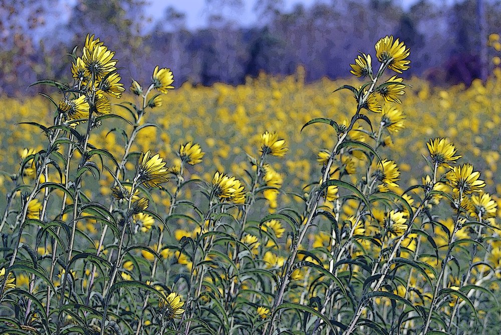 Flower Wildflowers.jpg