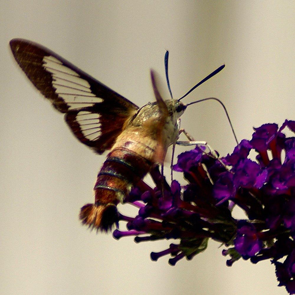 Butterfly – Version 4 (1).jpg