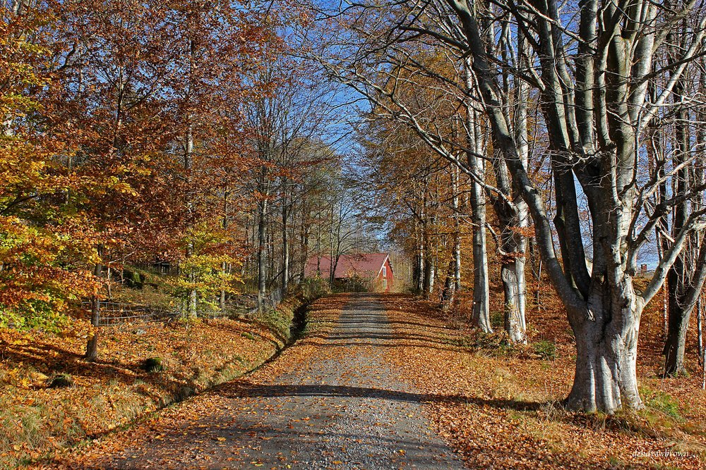 Scenery Fall Sweden Fall 2013 Anselmo Gallery MMAG Swedish country road IMG_0371_edited-1.jpg