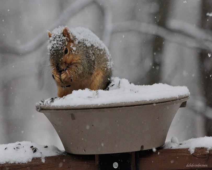 Creatures squirrel.jpg