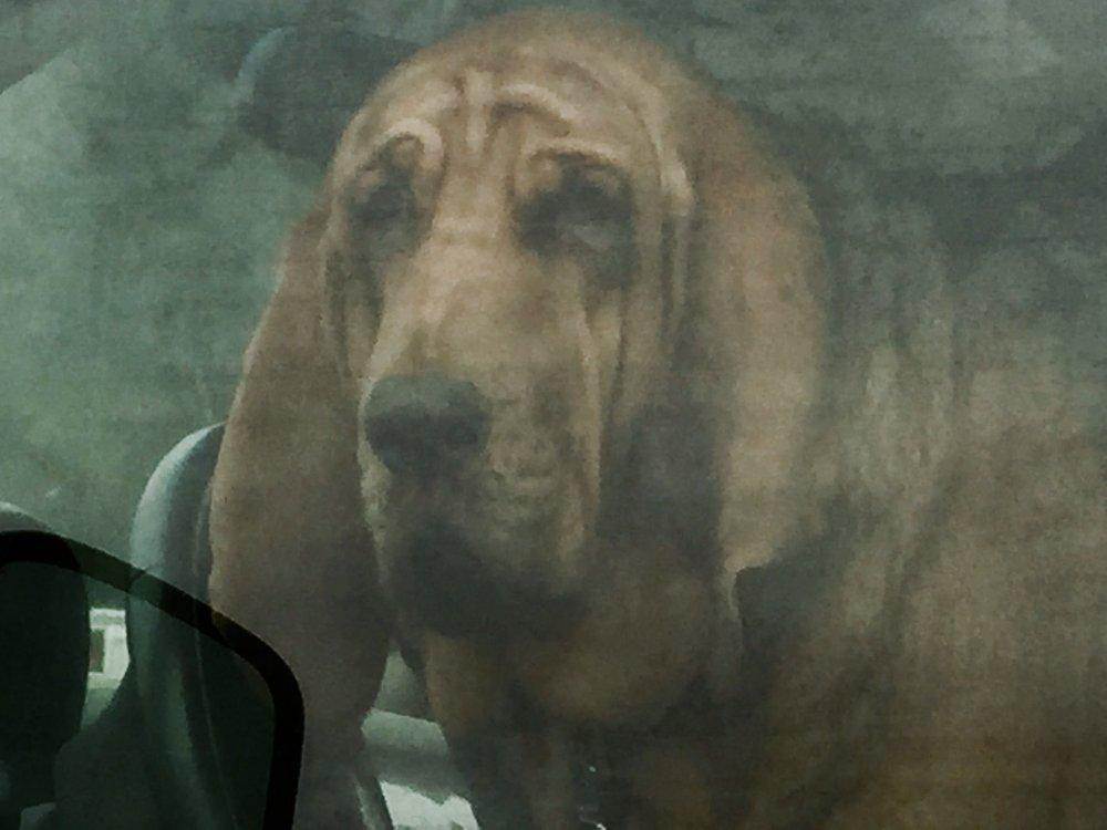 Critter Dog.jpg