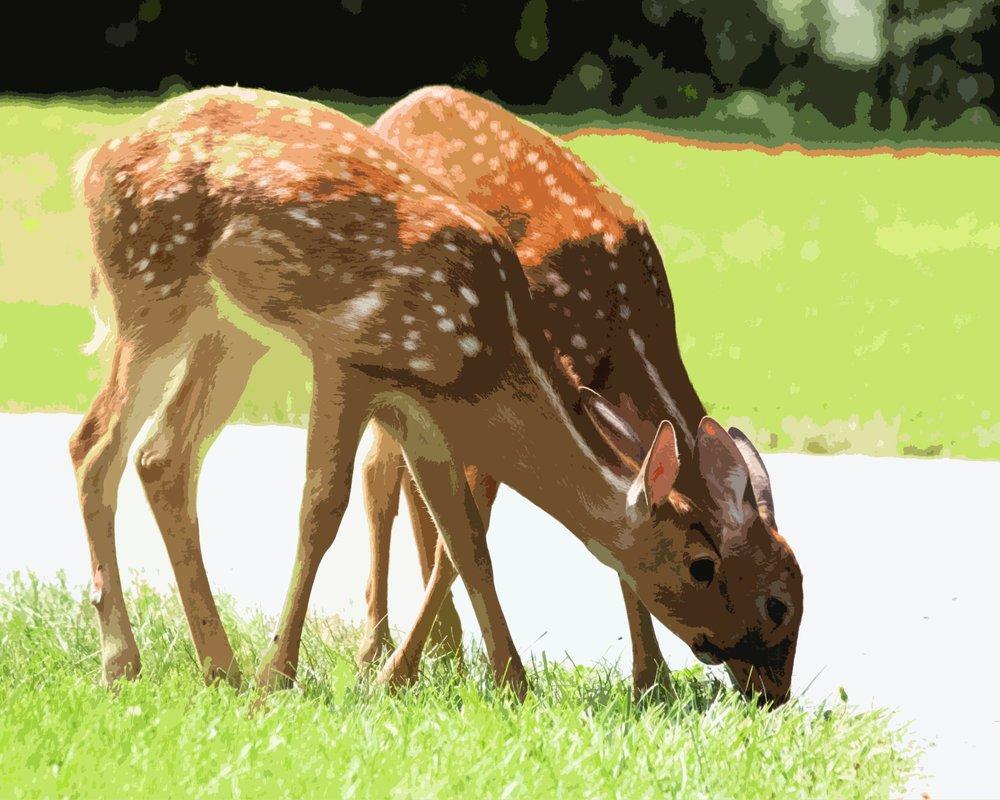 Deer (3).jpg