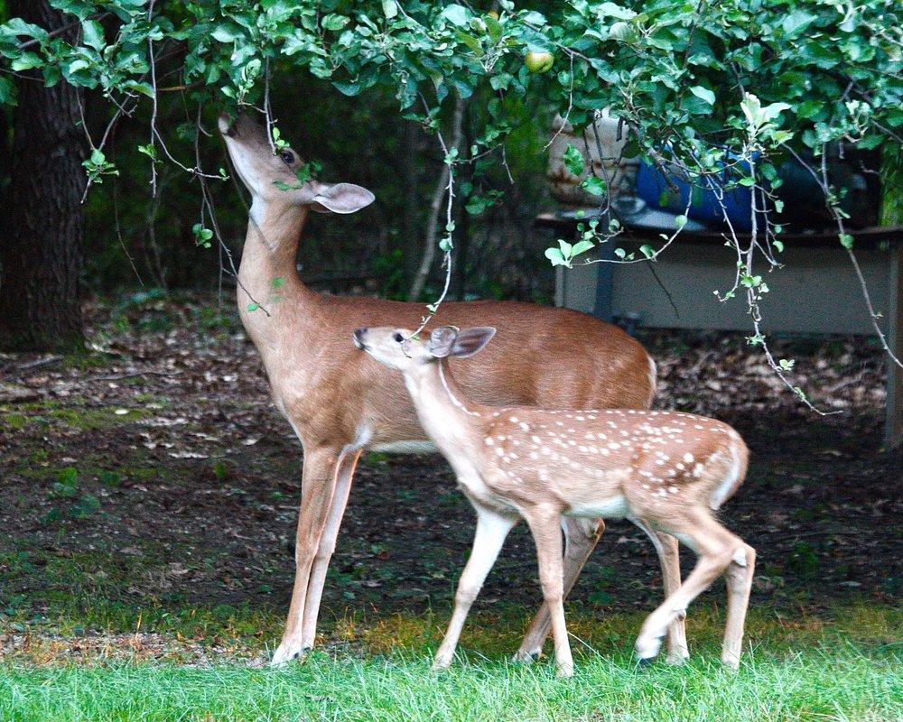 Deer (2).jpg