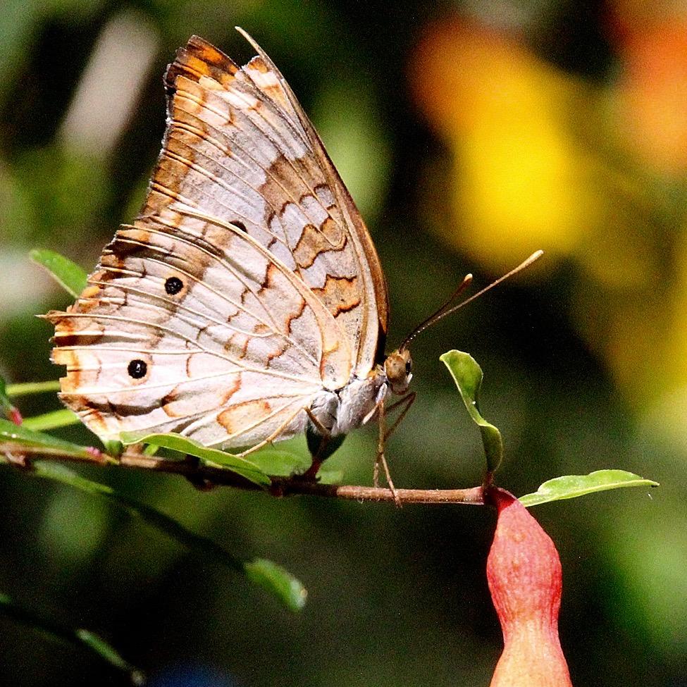 Butterfly – Version 4.jpg